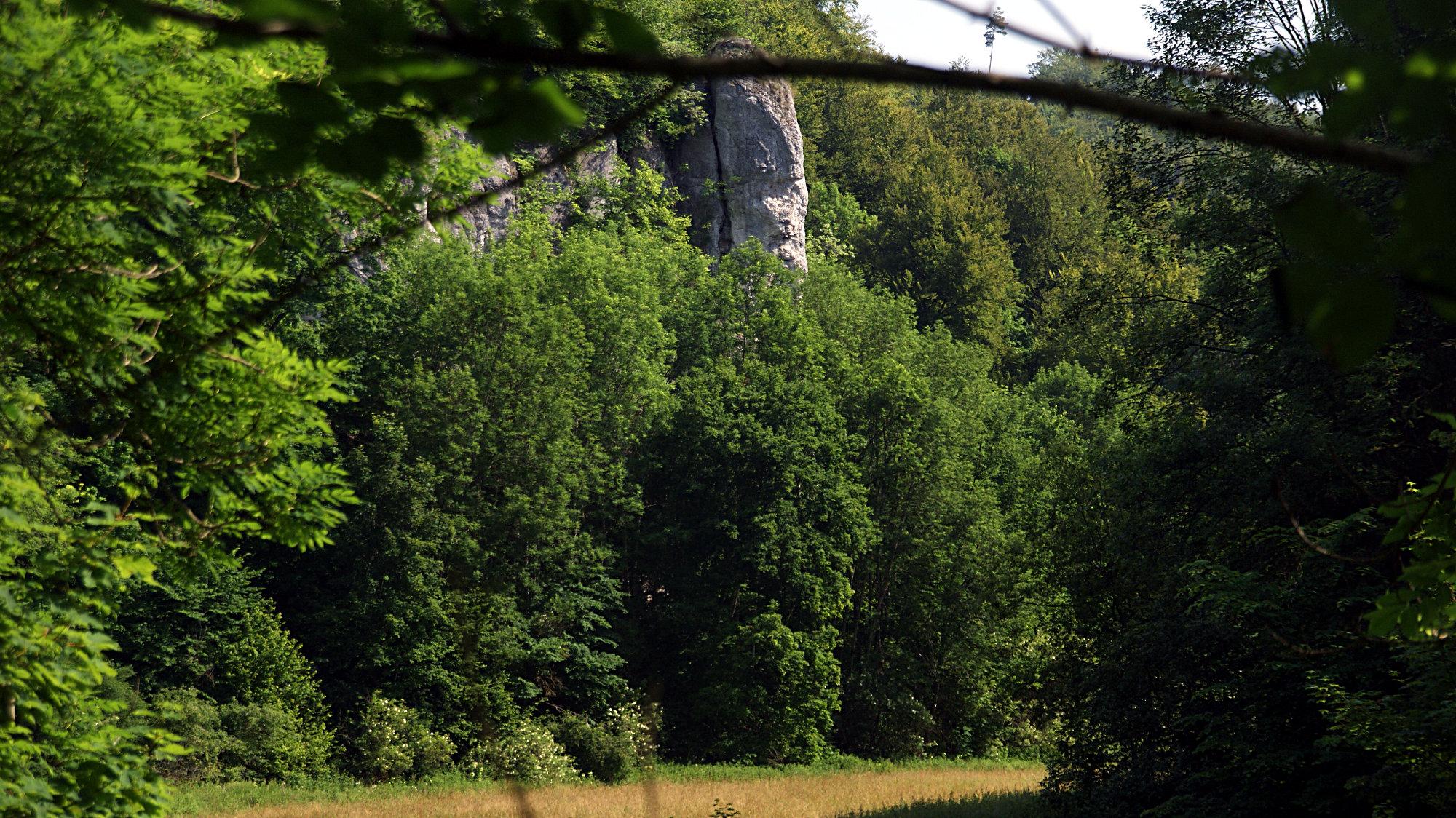 Fischburgtal