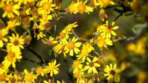 Herrliches Gelb